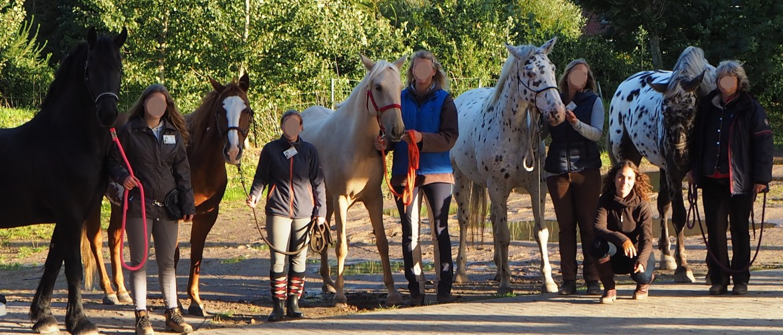Kenzie Dysli - Motiviere Dein Pferd