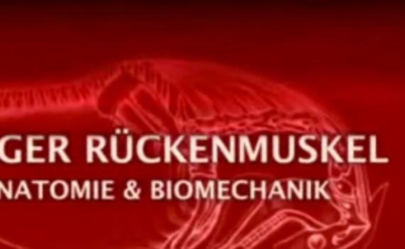 Langer Rückenmuskel - Anatomie und Biomechanik beim Pferde