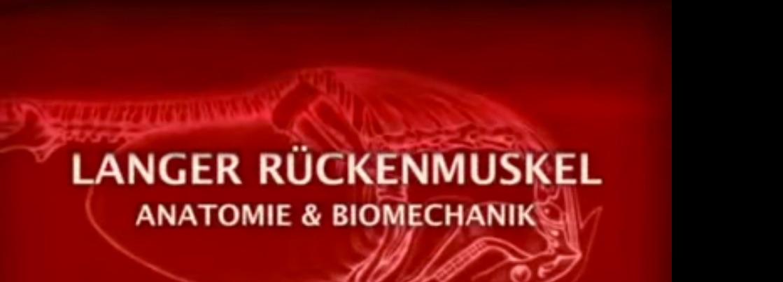 Videoempfehlung: Der lange Rückenmuskel - Anatomie und Biomechanik ...