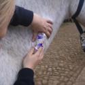 Pferdemassage Kurs