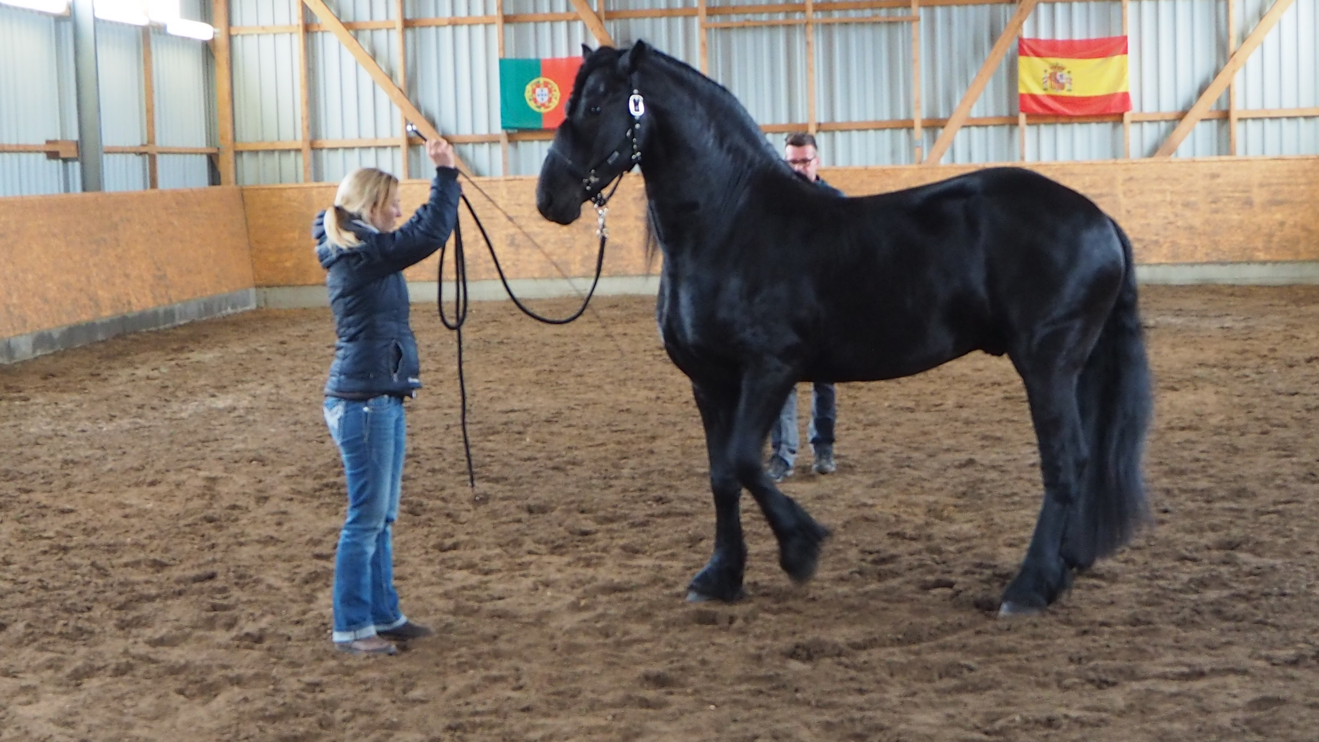 Basiserziehung Pferd