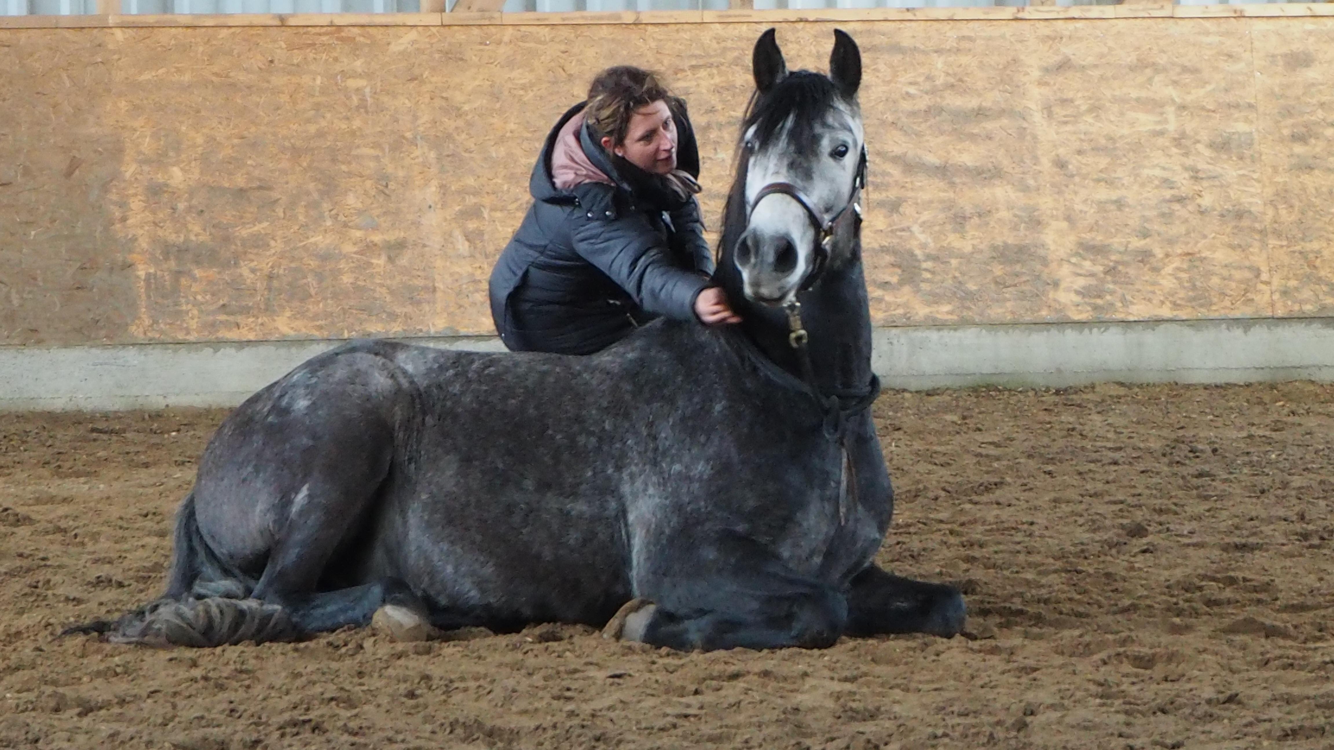 Belohnung Pferd