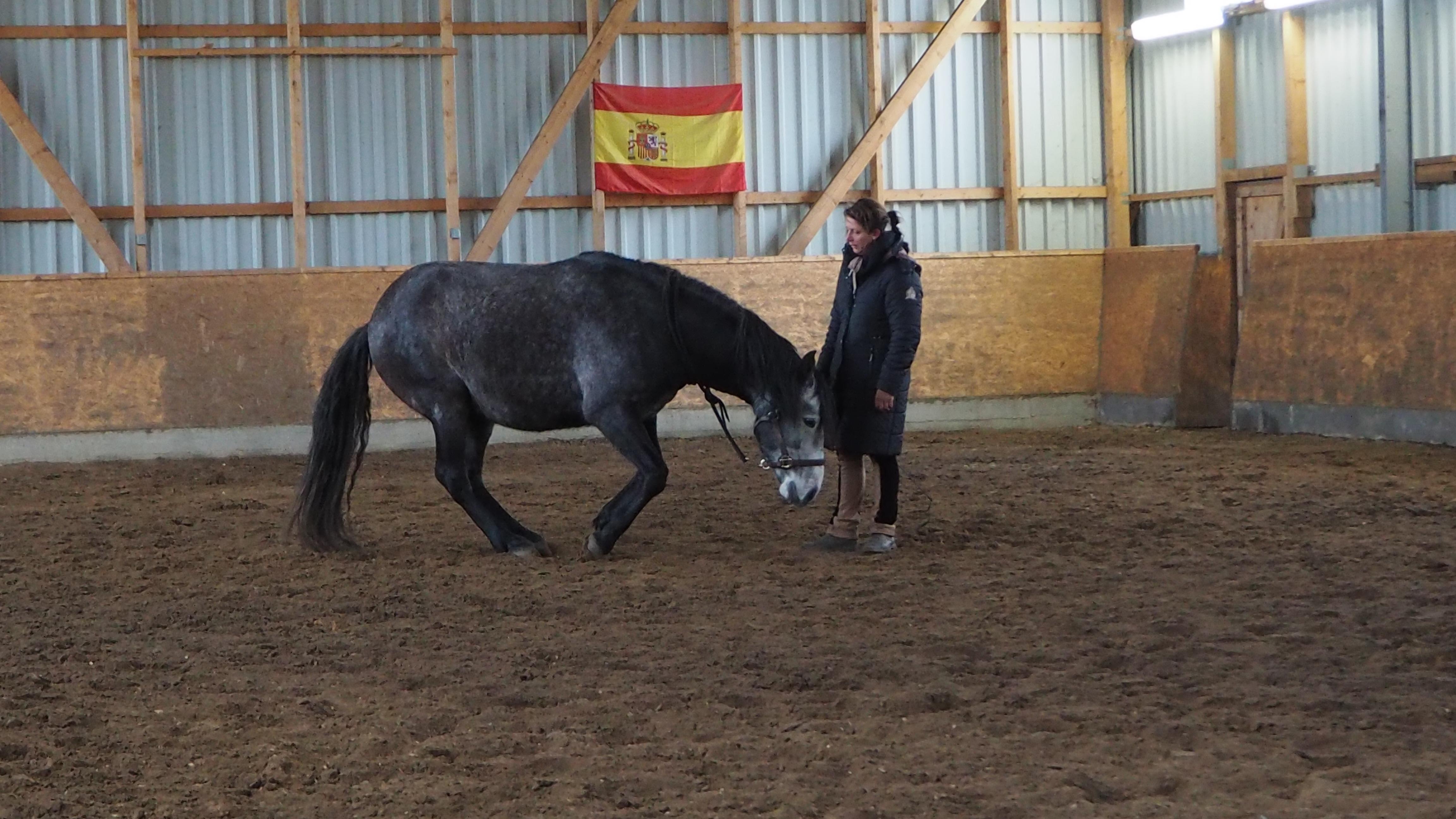Ablegen Pferd Hinlegen