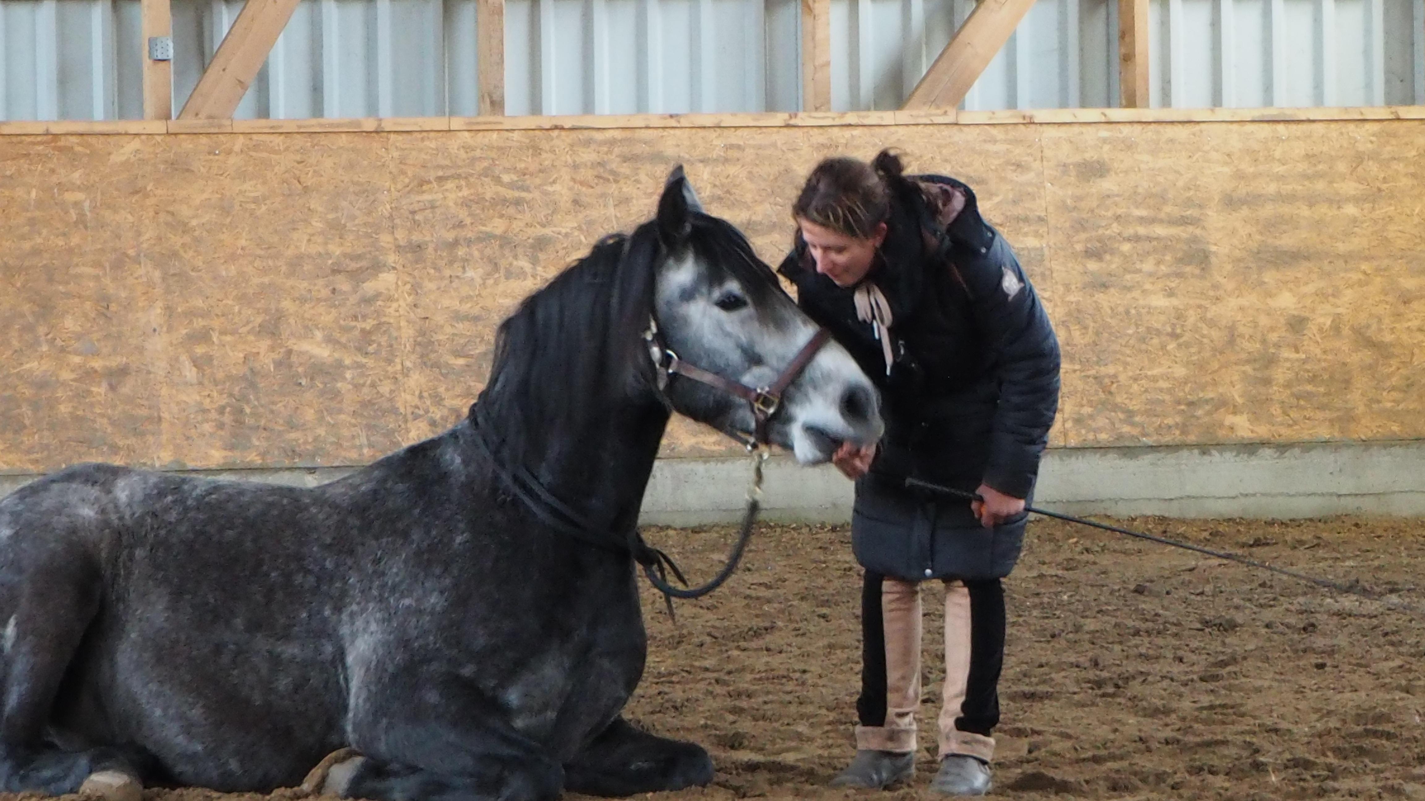 Pferd im Liegen