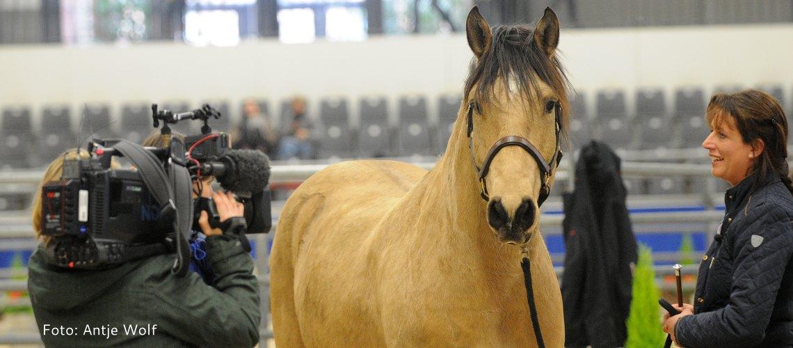 Gelebte Freiheit - Nicole Künzel mit ihrem Pferd bei Frédéric Pignon