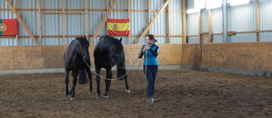 Zirkeln mit mehreren Pferden