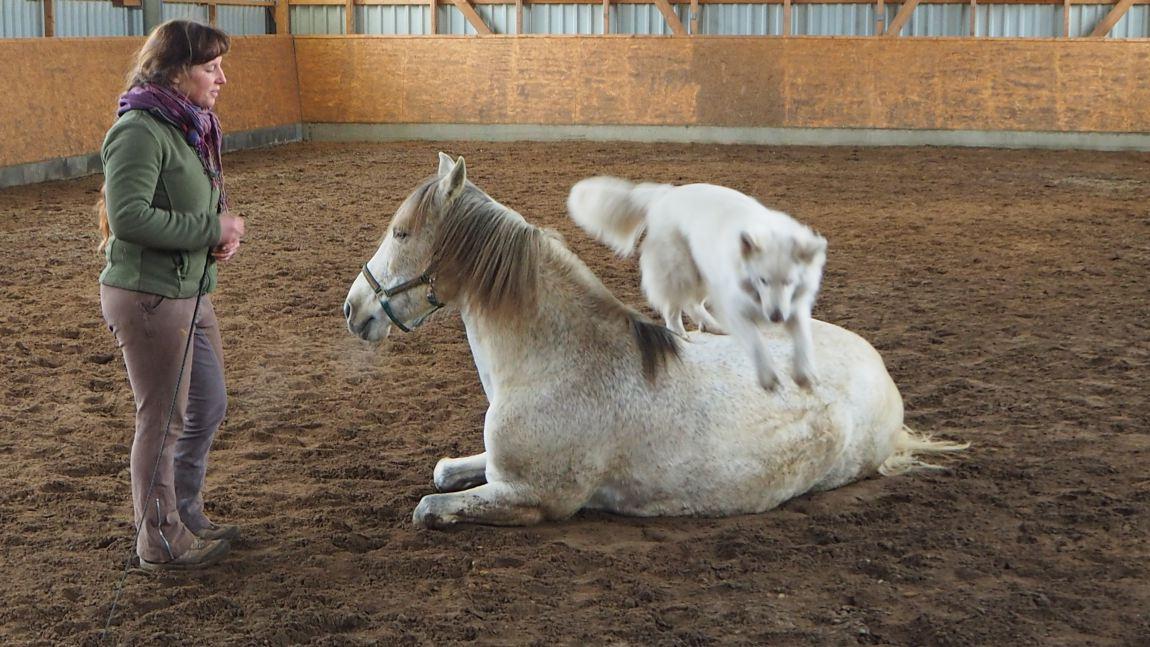 Zirkuslektionen Pferd und Hund
