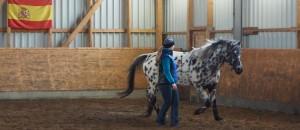 Katharina von Lingen von Horsecompetence
