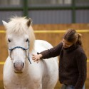 Freiarbeit Pferd Freiarbeitskurs Lehrgang Niedersachsen 2017