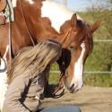 Katharina Claudi - Pferde bewegen