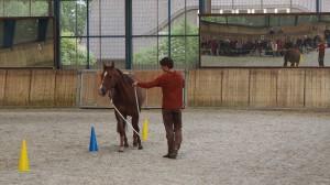 Arien Aguilar Lehrgang - Niedersachsen - Kurs Bodenarbeit Horsemanship