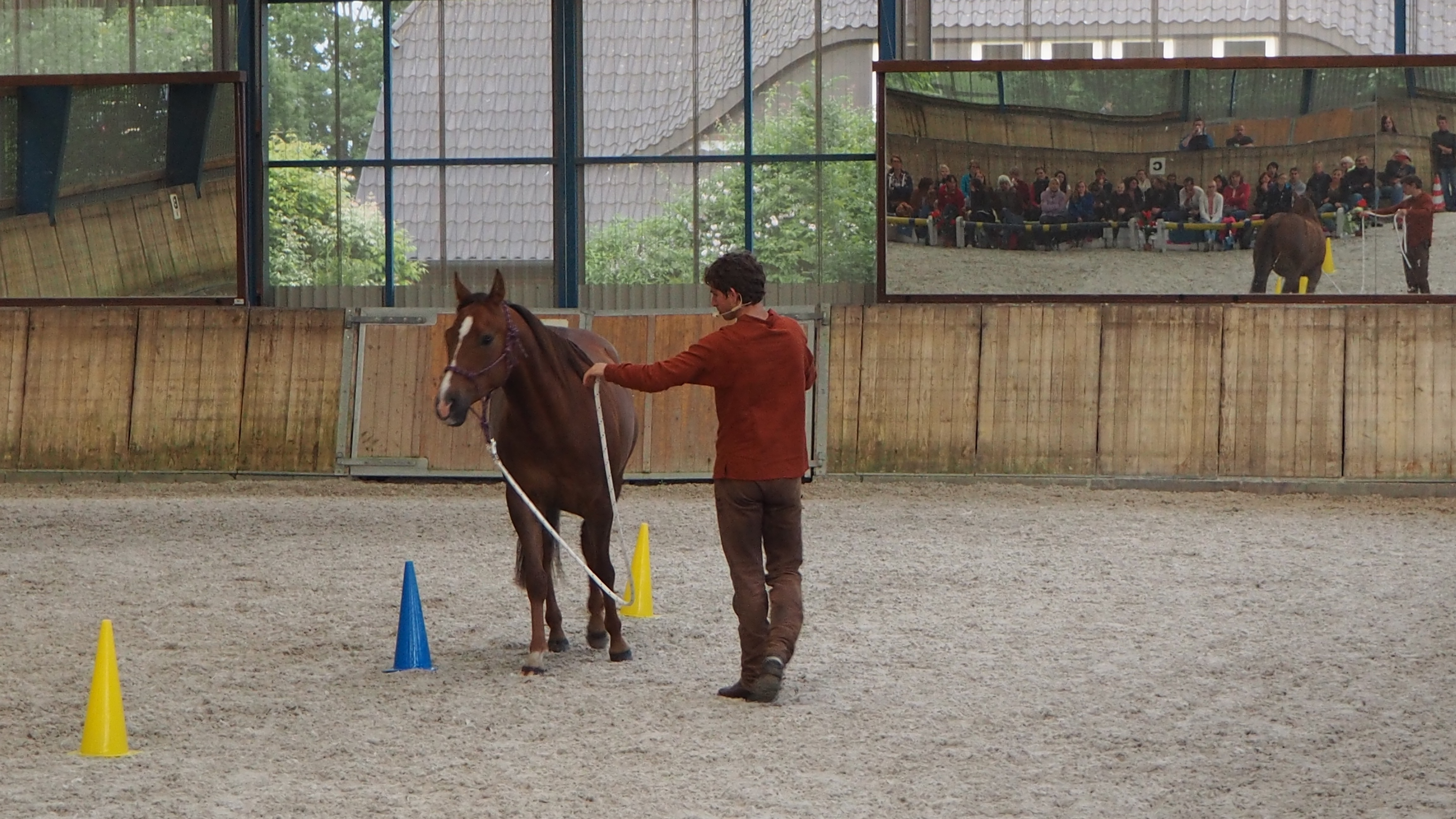 pferde isländer gymnastizieren