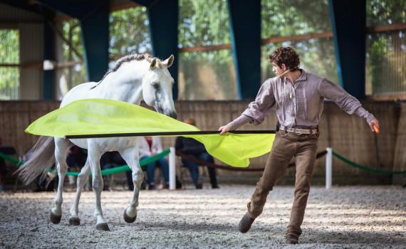 Reitkurs Horsemanship Horseman Bodenarbeit Freiarbeit 2017