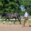 Ausbildung des jungen Pferdes