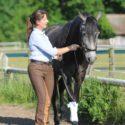 Handarbeit Pferd - Arbeit an der hand