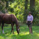 Sicherheit im Umgang mit Pferden