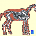 Physiotherapie Pferdebeurteilung Stephanie Reineke