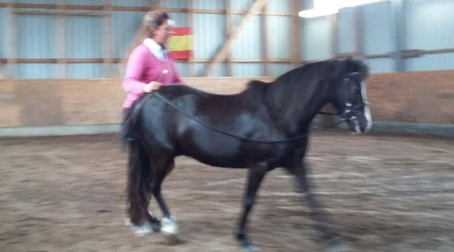 Pony Pony am Langzügel mit Nicole Künzel