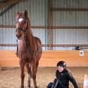 Falltraining Pferd