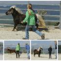 Horsemanship Kinder Jugendliche Kurs