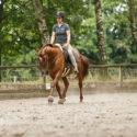 Kurs Pferd NRW Dressur Geraderichten