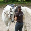 Kurs Seitengänge Pferd NRW