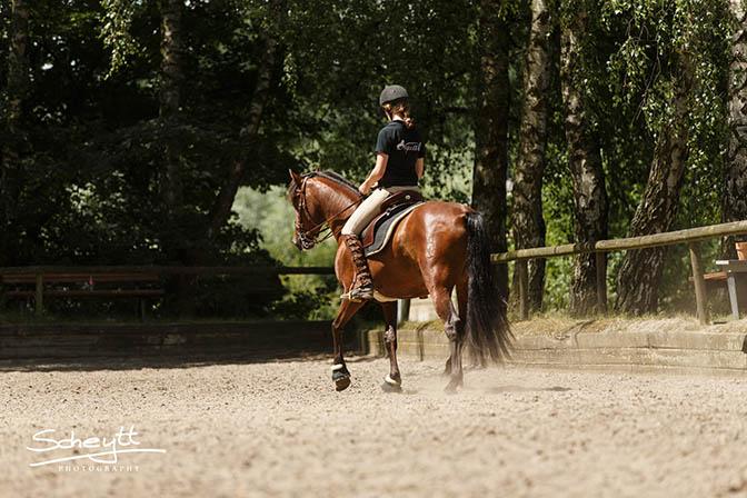 Vortrag Theorie Seitengänge Pferd