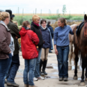 Grundkurs Anatomie Fortbildung Pferdetherapeut