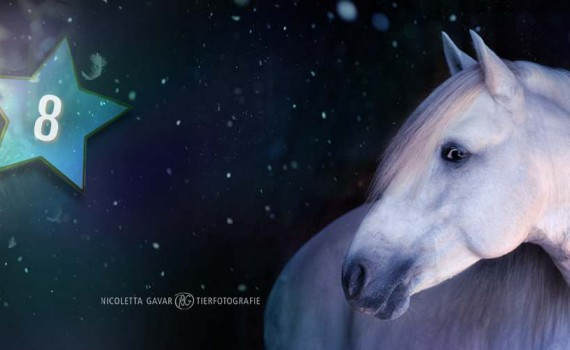 Pferde Adventskalender Reiten Gewinnspiel