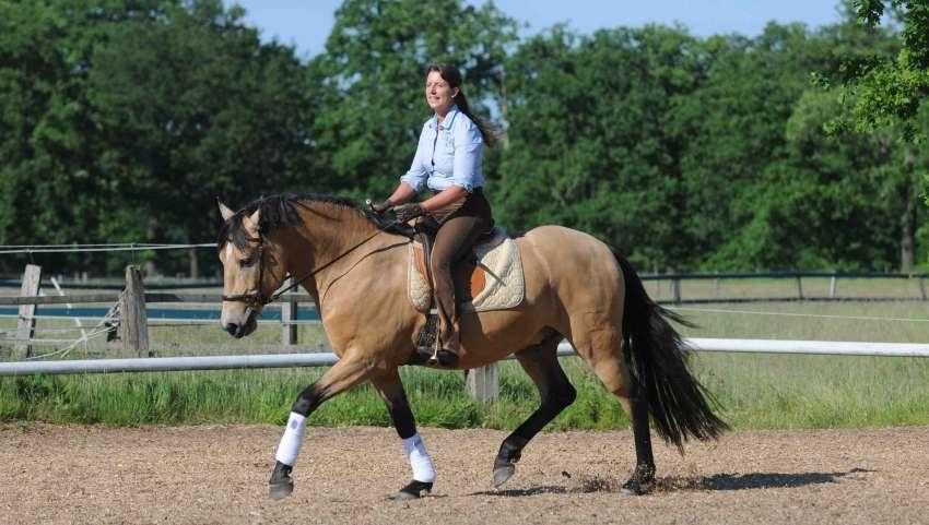 Vortrag Pferdeausbildung