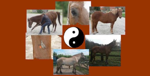Kurs TCM Pferd