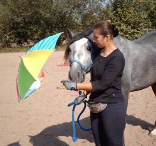 Vortragsreihe Pferdeverhalten, Ausbildung