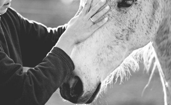 Im Sinne des Pferdes Trainerausbildung