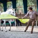 Horsemanship Bodenarbeit Lehrgang 2017
