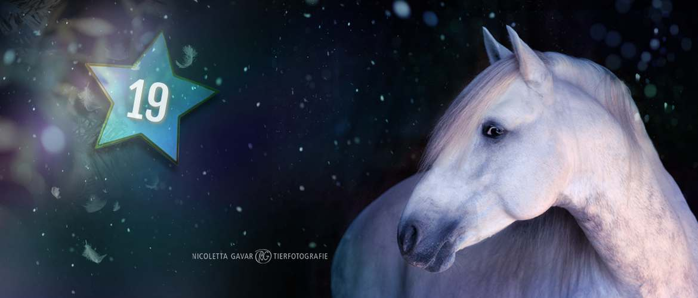 Gewinnspiel Adventskalender 19. Dezember Pferde