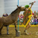Show Pferde