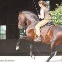 Working Equitation Kurs NRW