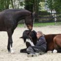 Bodenarbeitskurs Pferd 2017