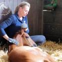 Jungpferde Ausbildung Fohlen Ausbildung Kurs