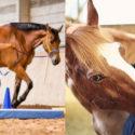 Kurs Senioren Pferd Reha Equikinetic NRW