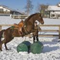 Horsemanship Kurs Bayern 2017