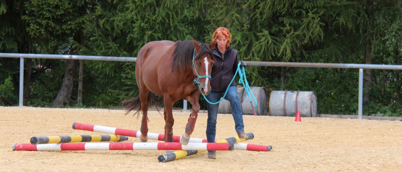 Lehrgang Unterricht Pferd Bodenarbeit Hessen