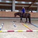 TTouch Pferd Lehrgang Baden-Württemberg 2017