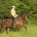 Schöner reiten - Training und Therapie