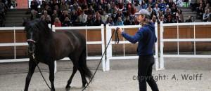Die Zutaten für einen guten Pferdetrainer: Liebe, Leidenschaft, Leichtigkeit und ... Können