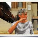 Ausbildung zum osteopathischen Pferdetherapeuten nach Welter-Böller