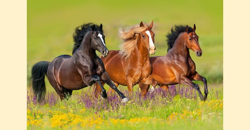 boxengr e pferd berechnen wieviel kostet ein pferd im monat so berechnen sie den. Black Bedroom Furniture Sets. Home Design Ideas