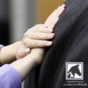 Anne Rettenbach - Tierphysiotherapie - Tierarztpraxis Anika Fröhlich