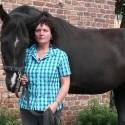 Beate Petrick - Pferdegerechtes Longieren, Bodenarbeit, Reiten