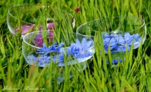 Kennst du Bach-Blüten ? Ein Erfahrungsbericht unserer Osterkörbchen-Gewinnerin